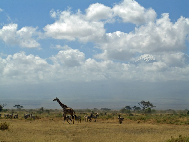Toni's picture of the African landscape. Used with permission.