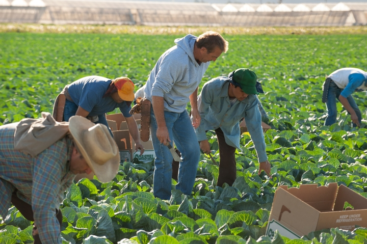 Picking in the fields with the Diaz family