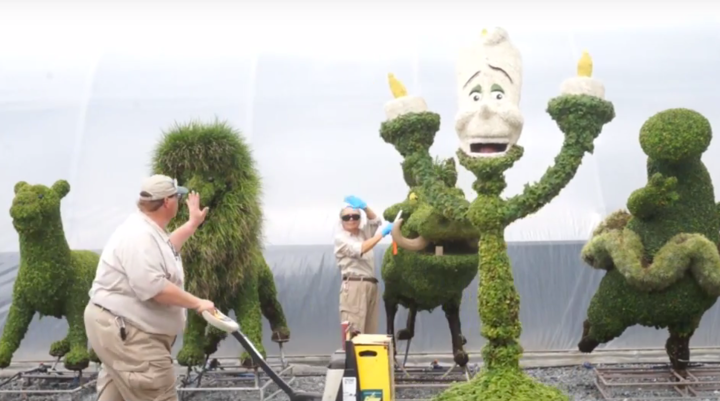 Some of the work done by the horticulture department at Disney